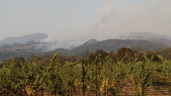 Beltane-Ranch-vineyards-and-smoke