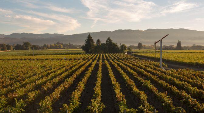 NVL: Napa Valley & Cabernet Sauvignon